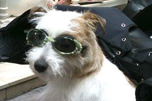 Hund.Brille.Paris 2